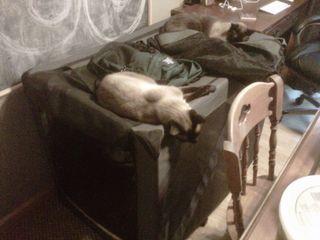 Kittybunkbeds